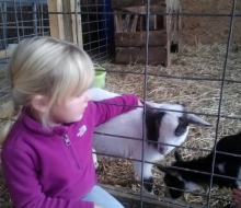 Pond Hill Farm Petting Zoo
