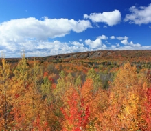 Fall Video
