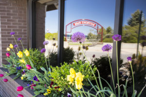 colorful tulips and pansies by the petoskey waterfront