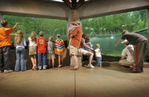 families watching fish in the viewing window at the oden fish hatchery