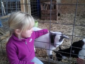 blond child petting baby goat at pond hill farm